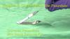 Staple Remover Kit - Dynarex - STR-4522-3